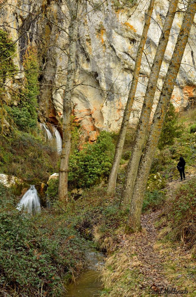Photo in Landscape #bosque #verde #agua #naturaleza #persona