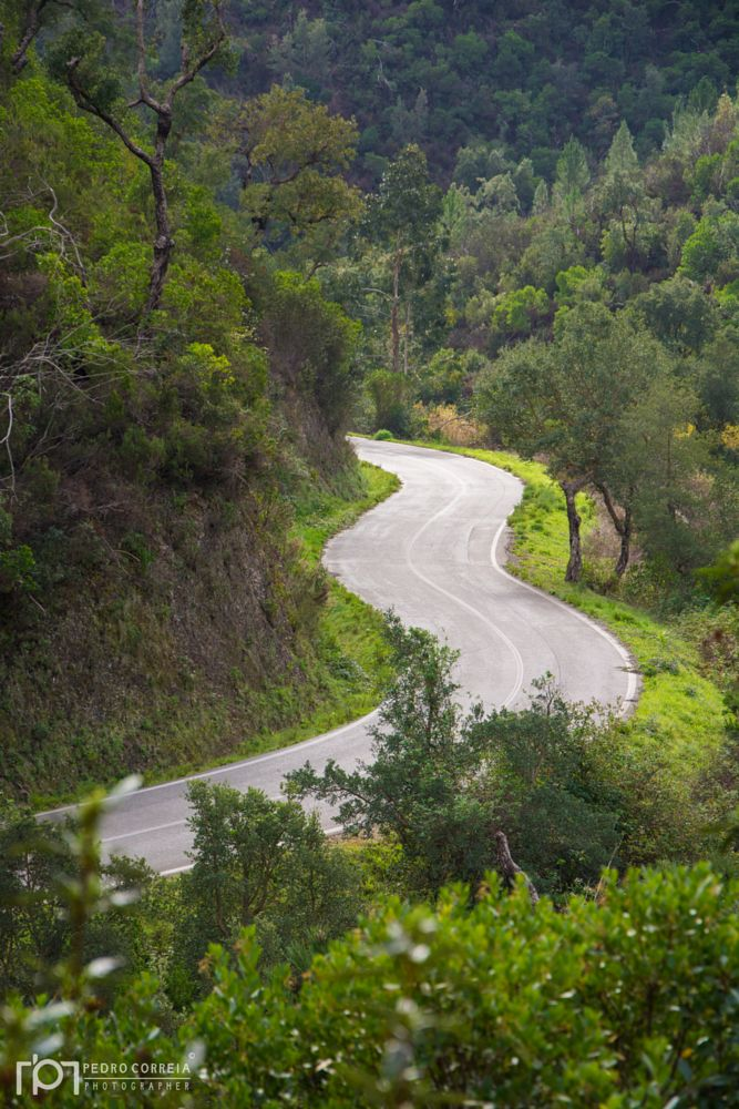 Photo in Landscape #curves #green #nature