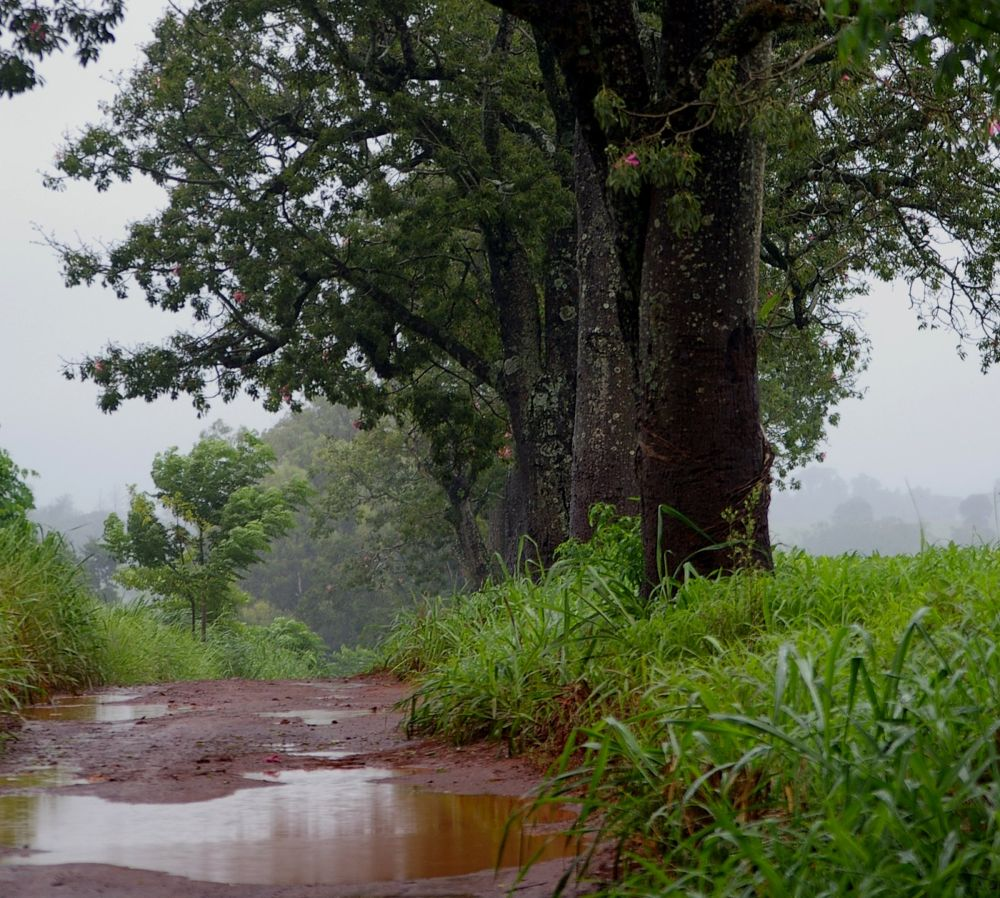 Photo in Landscape #...