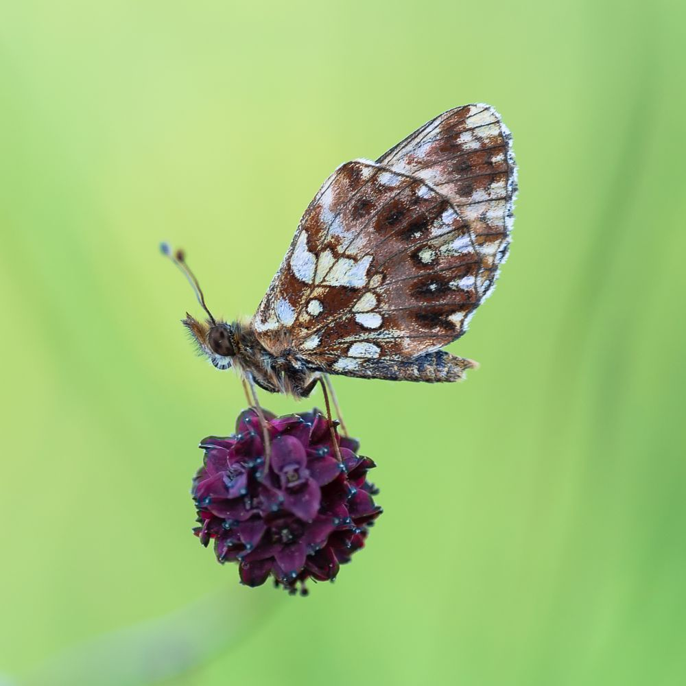 Photo in Macro #butterfly #butterflies #macro #closeup #detail #pentax #tamron #90mm
