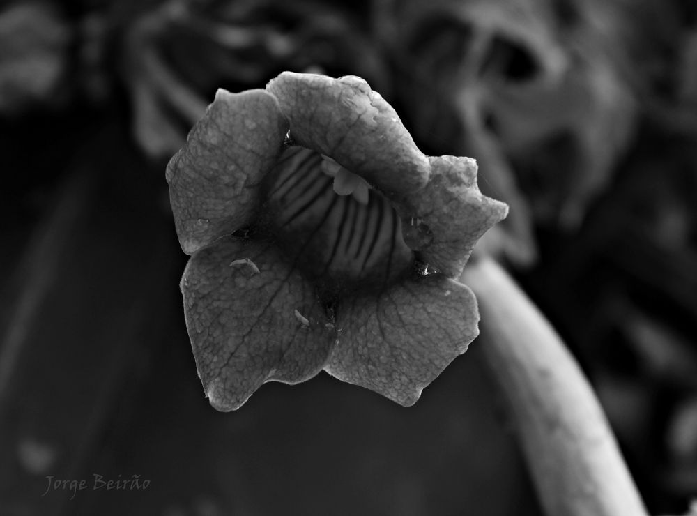 Photo in Black and White #flower #black #shadow