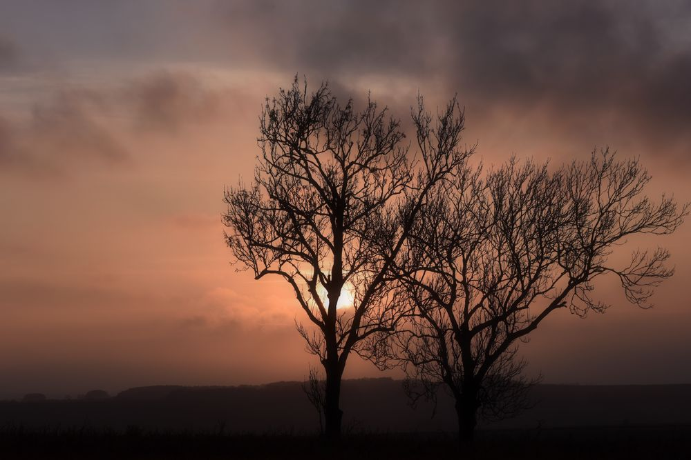 Photo in Landscape #sunset #sky #clouds #trees #silouette #heppydog