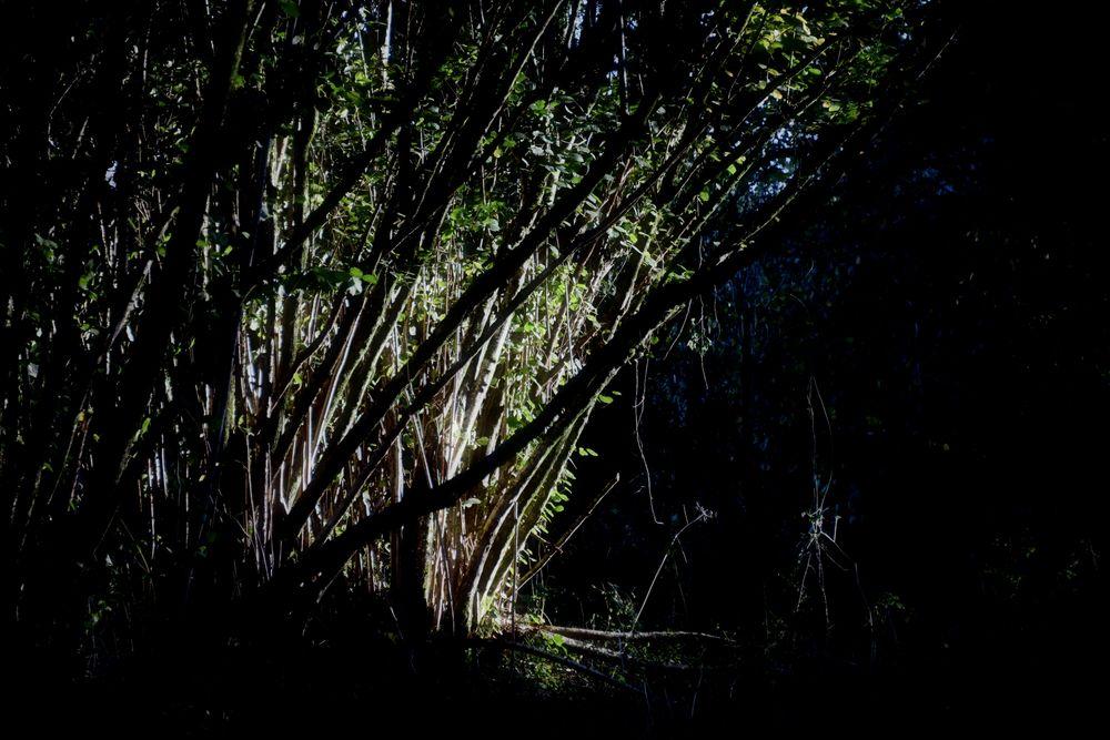 Photo in Landscape #woods #forest #sunlight #dark #outdoors #nature #natural #autumn #heppydog