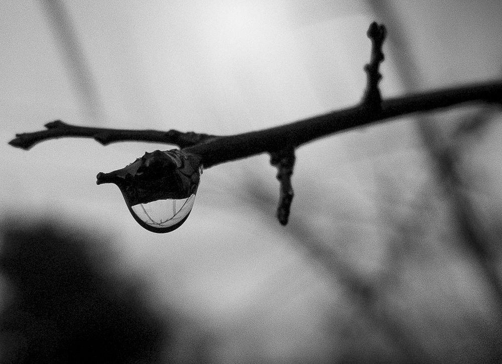 Photo in Nature #water droplet #droplet #water #mono