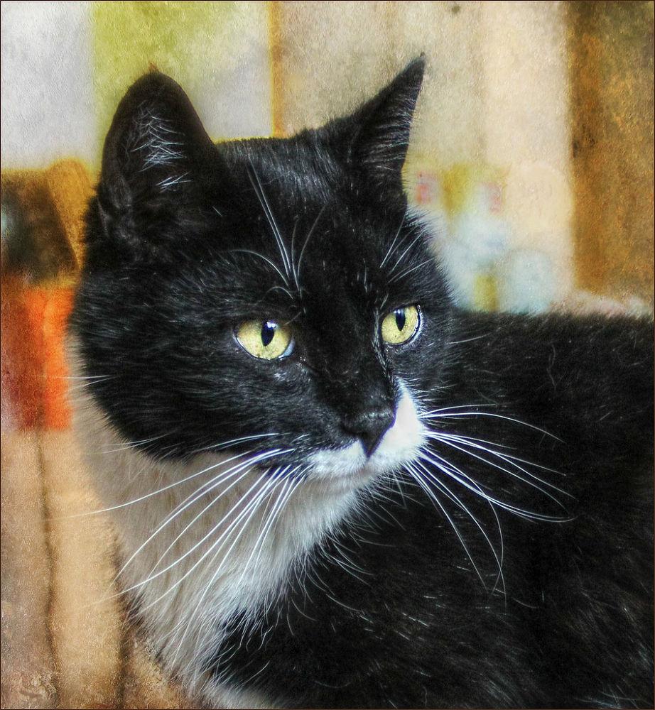 Photo in Animal #cat #animal #kitty #gato #feline