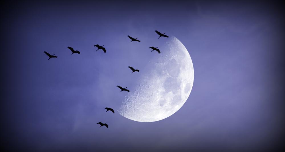 Photo in Nature #sky moon birds