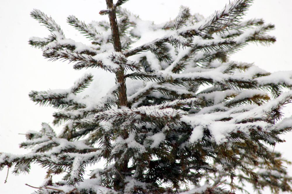 Photo in Nature #albero #neve #bianco #freddo