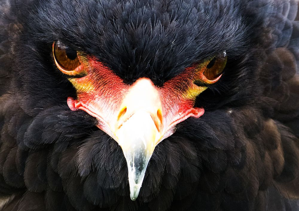 Photo in Nature #close up #bird of prey