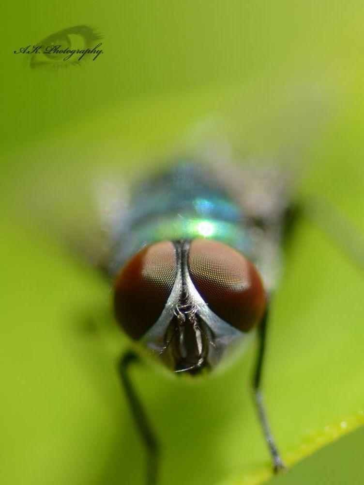 Photo in Macro #nature #macro #fly #wings #insect #closeup #wing #natgeo