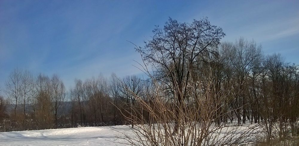 Photo in Nature #winter snow