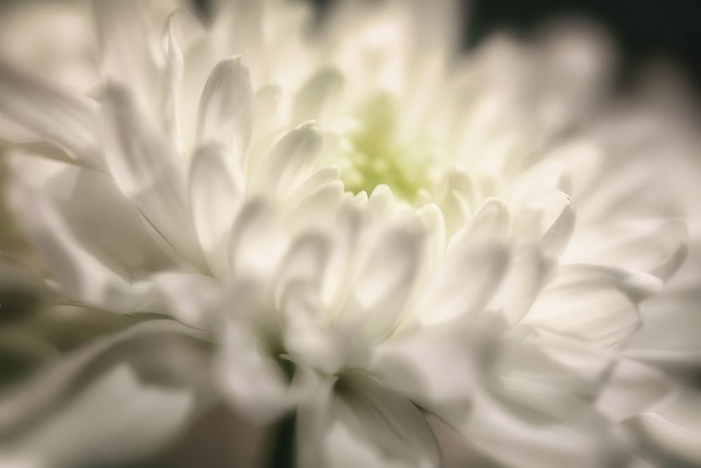 Photo in Random #earth #nature #flowers #flower photography #macro #white #good morning #canon eos #i.am