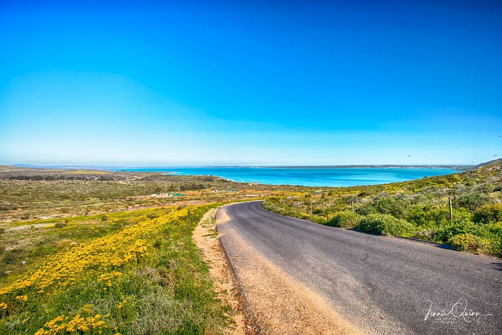 Photo in Landscape #landscape #west coast #langebaan #lagoon #wild flowers #road #travel #canon eos #my world #i.am