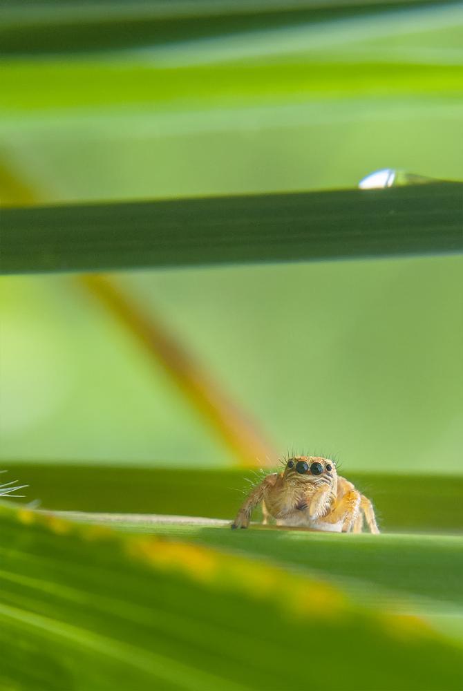 Photo in Macro #spider #macro #nature #green #nikon #indonesia
