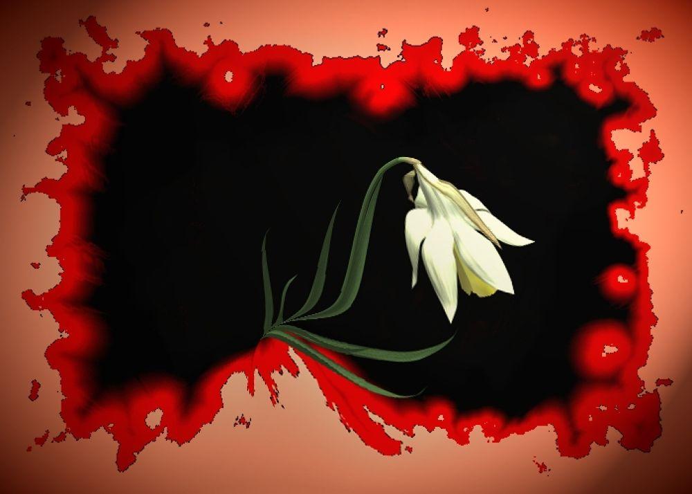 Photo in Random #(original #artwork #cm #gleeson) #gutwound #bloom