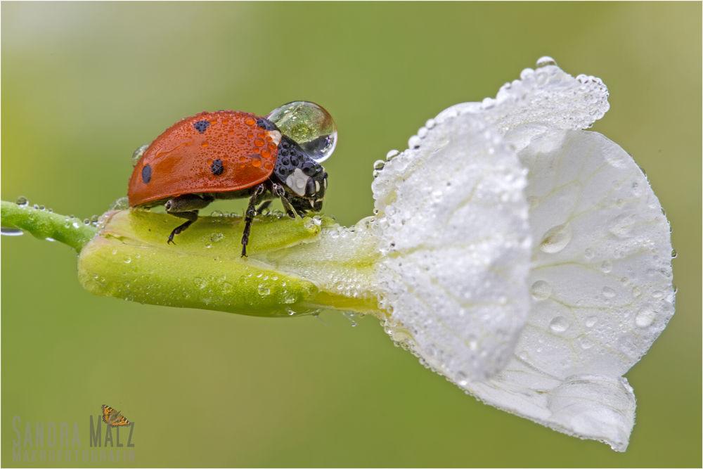 Photo in Macro #bug #luck #beetle #ypa2013