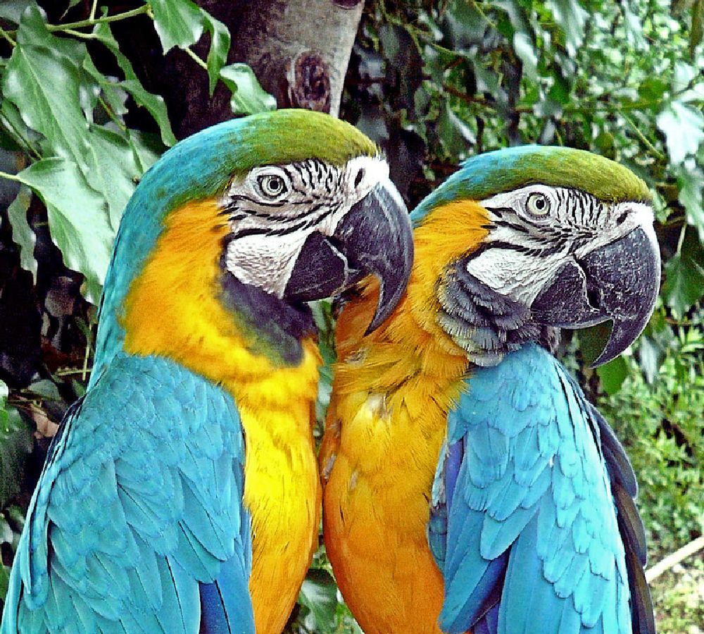 Photo in Animal #macaw #blue #birds #zoo #portugal