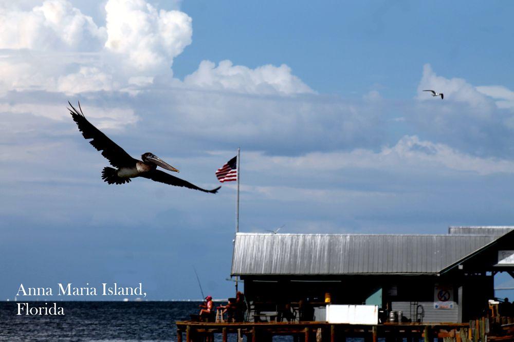 Photo in Random #pelicans #florida #birds #water #gulf