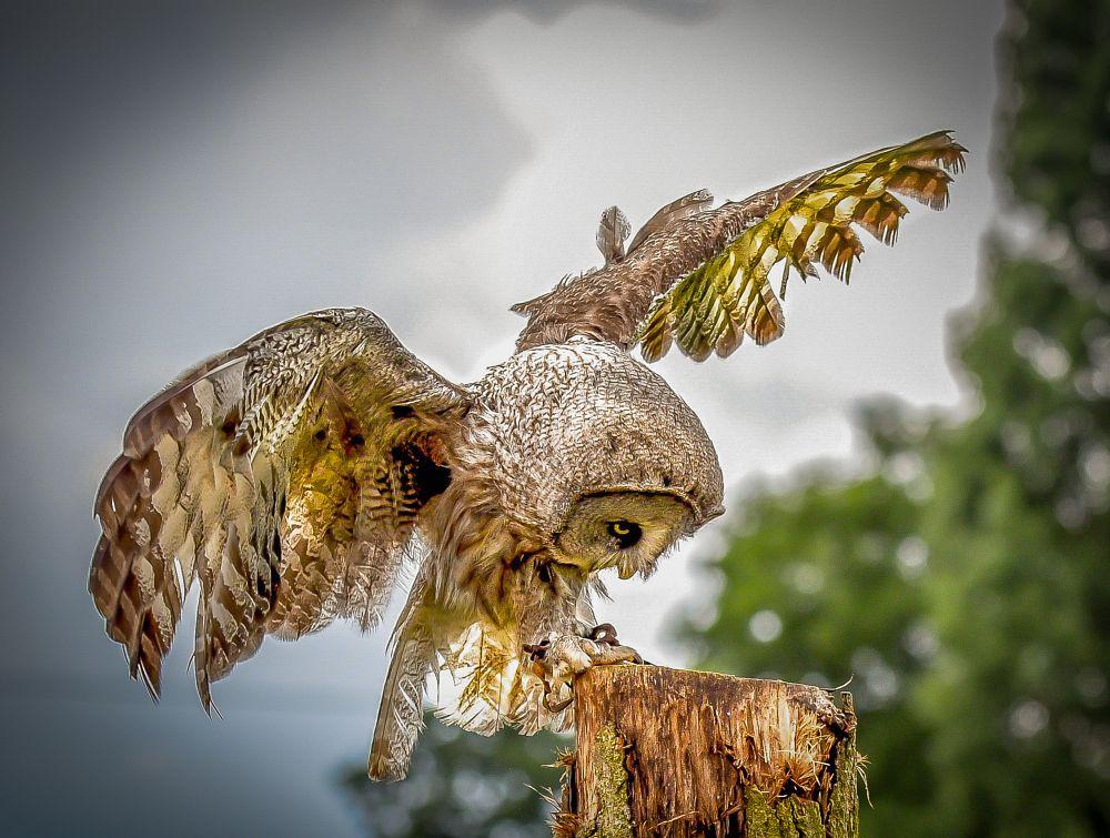 Photo in Animal #owl #bird #animals