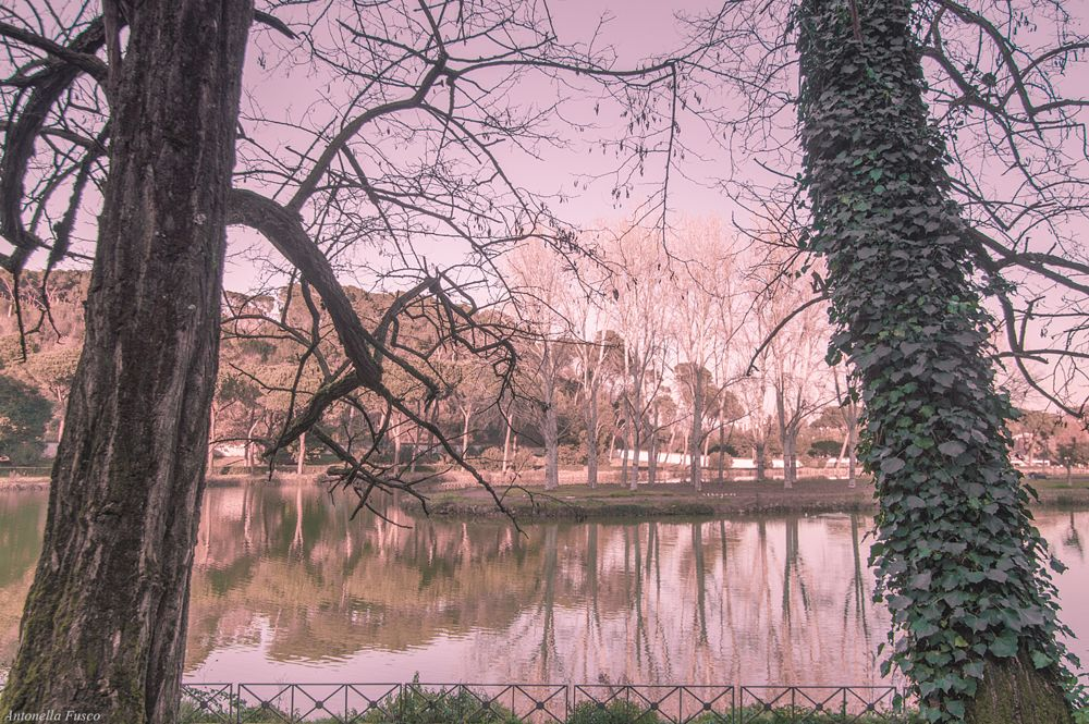 Photo in Landscape #alberi #lago