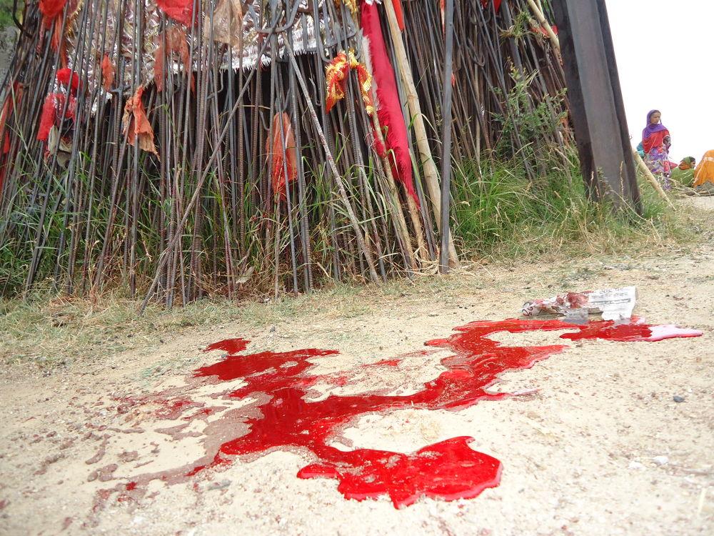 Photo in Random #animal sacrifice