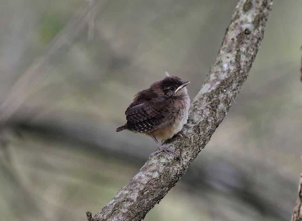 Photo in Nature #redwing black bird