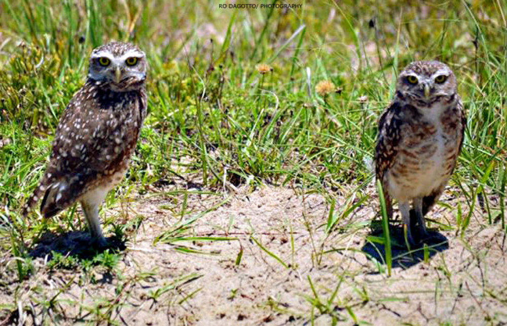 Photo in Animal #nature #animal #bird #nikon d3100