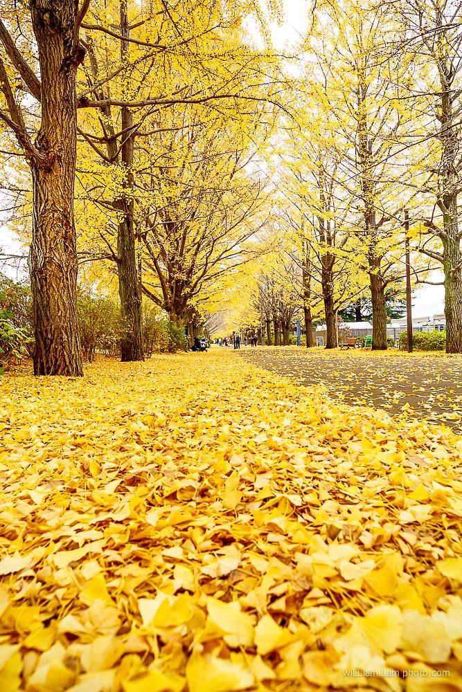 Photo in Landscape #japan #landscape #travel