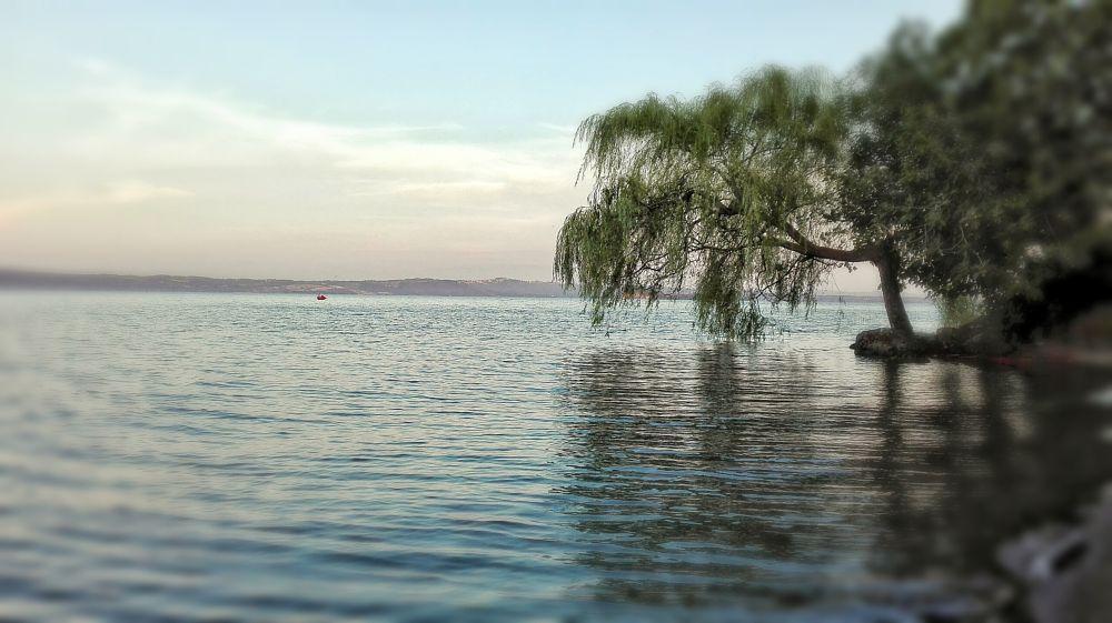Photo in Landscape #bolsena lake #summer #water #tuscia #italy #lazio #salice