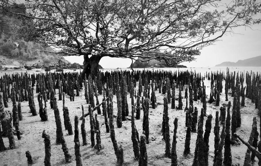 Photo in Travel #indonesia #lombok #bali #sea #island #landscape #bnw #black #blackandwhite #rock #tree #old #sun #bnw_ #travel #nikon #photography #nature