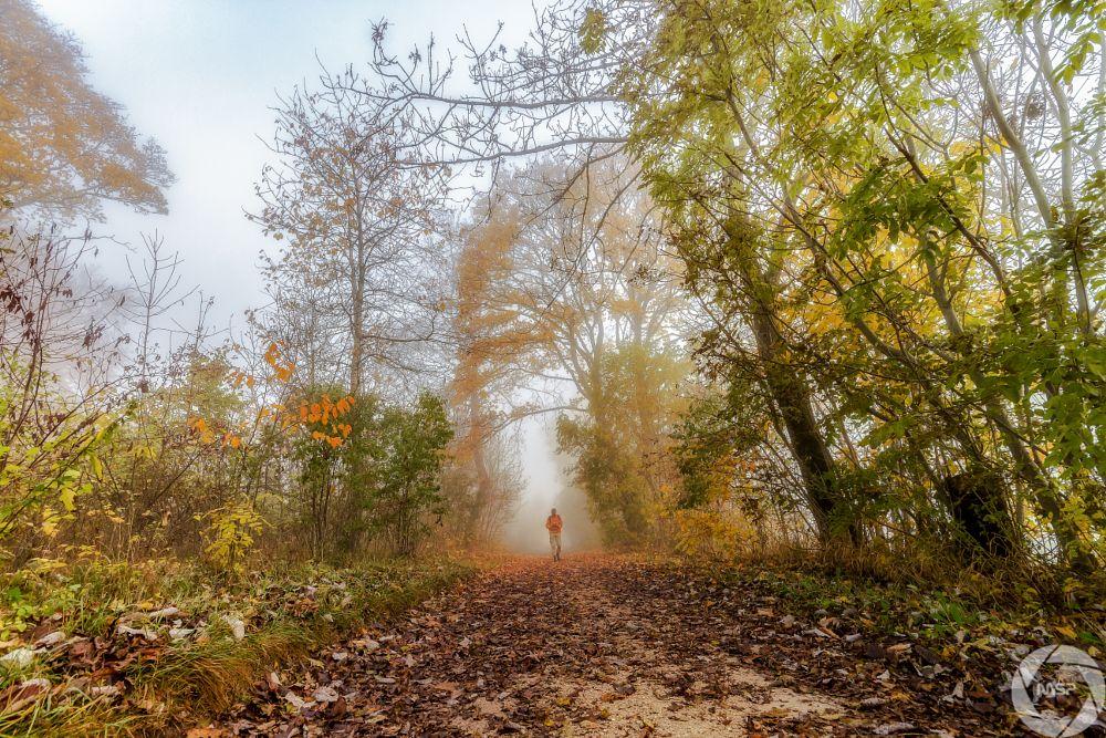 Photo in Nature #alb #albtrauf #autumn #baden-württemberg #deutschland #fog #germany #herbst #landscape #landschaft #mist #misty #natur #nature #nebel #outdoor #schwäbsche alb #wandern #wanderung