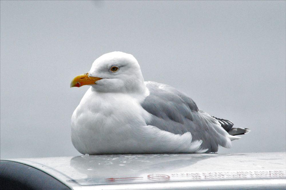 Photo in Random #sea birds #birds #wildlife #nature