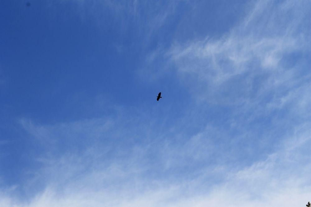 Photo in Animal #bird #blue sky #clouds