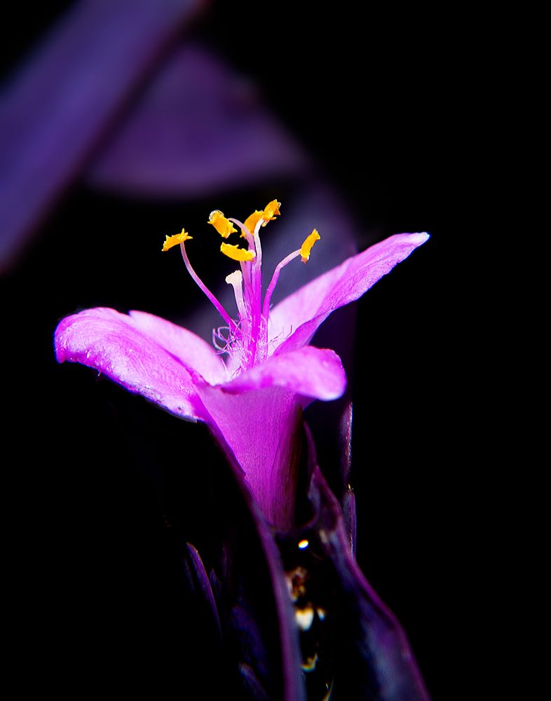 Photo in Macro #purple #flower #sunlight