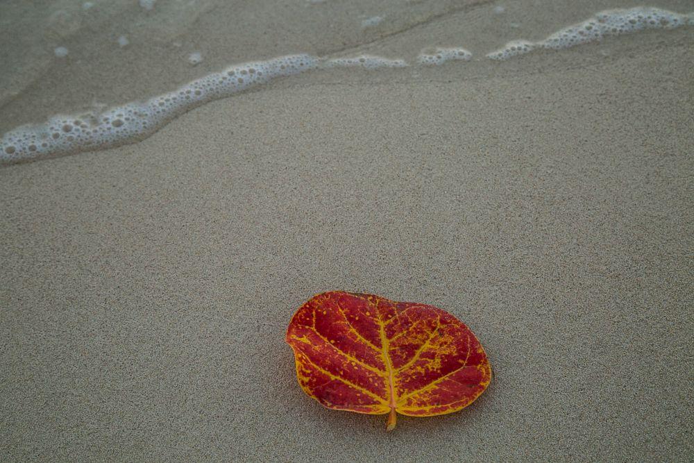 Photo in Sea and Sand #leaves #ocean #beach #tide #zen
