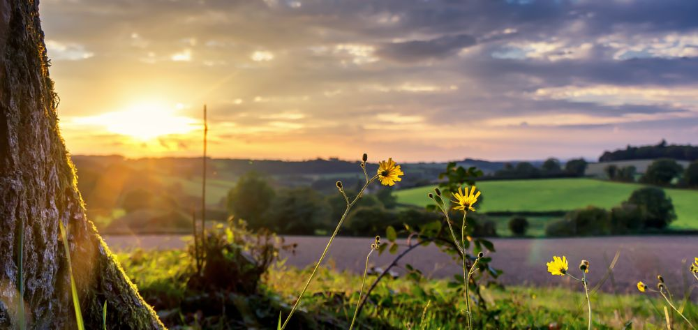 Photo in Landscape #sunset #fields #meadow #grass #tree #flowers #sky #clouds #hills #nature