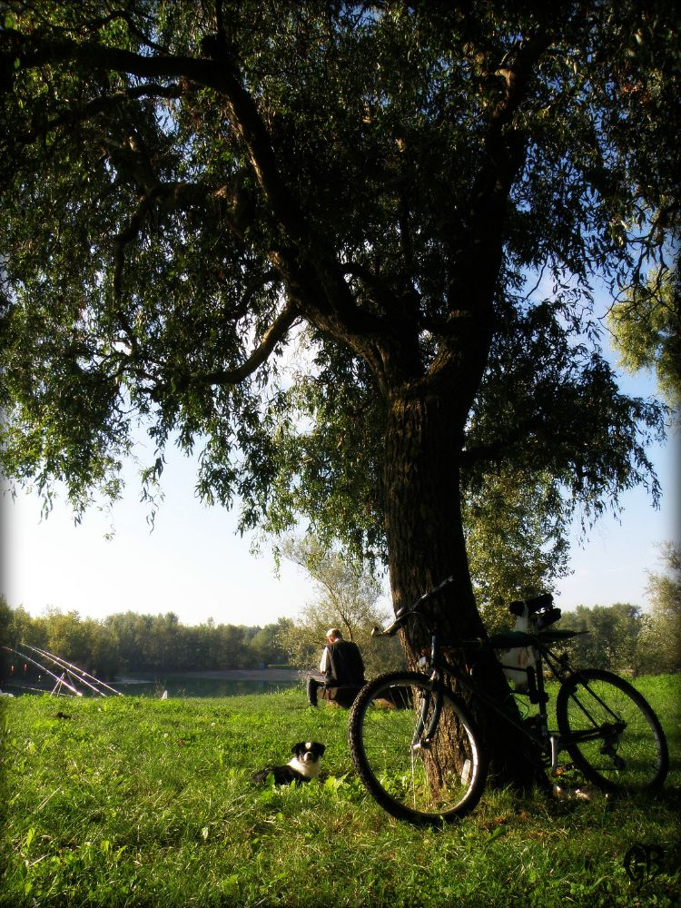 Photo in Random #dog #bicycle #tree