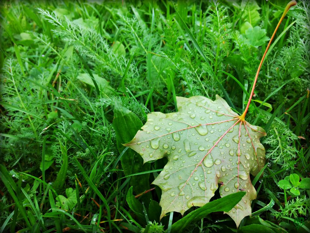 Photo in Nature #leaf #grass #drops