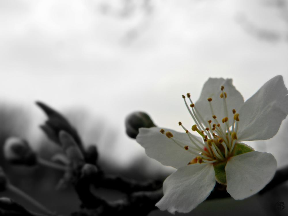 Photo in Macro #flower #white #macro