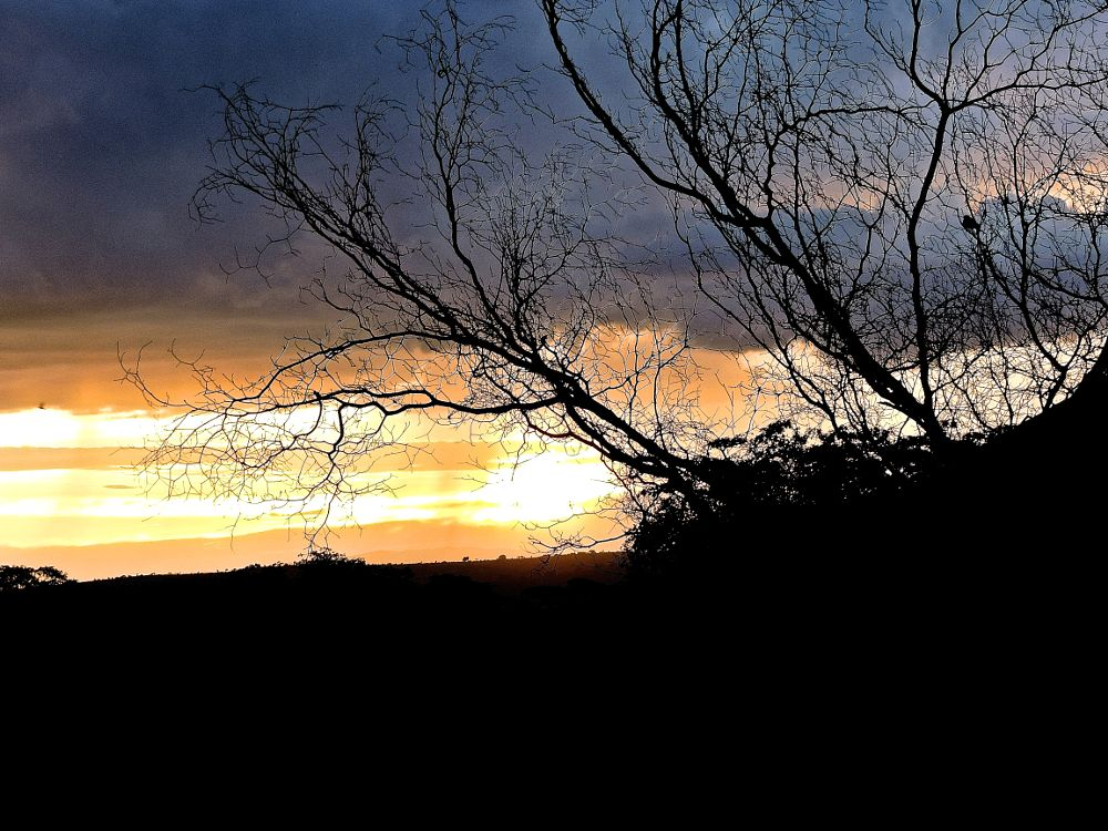 Photo in Nature #branches #winter #sunset #orange