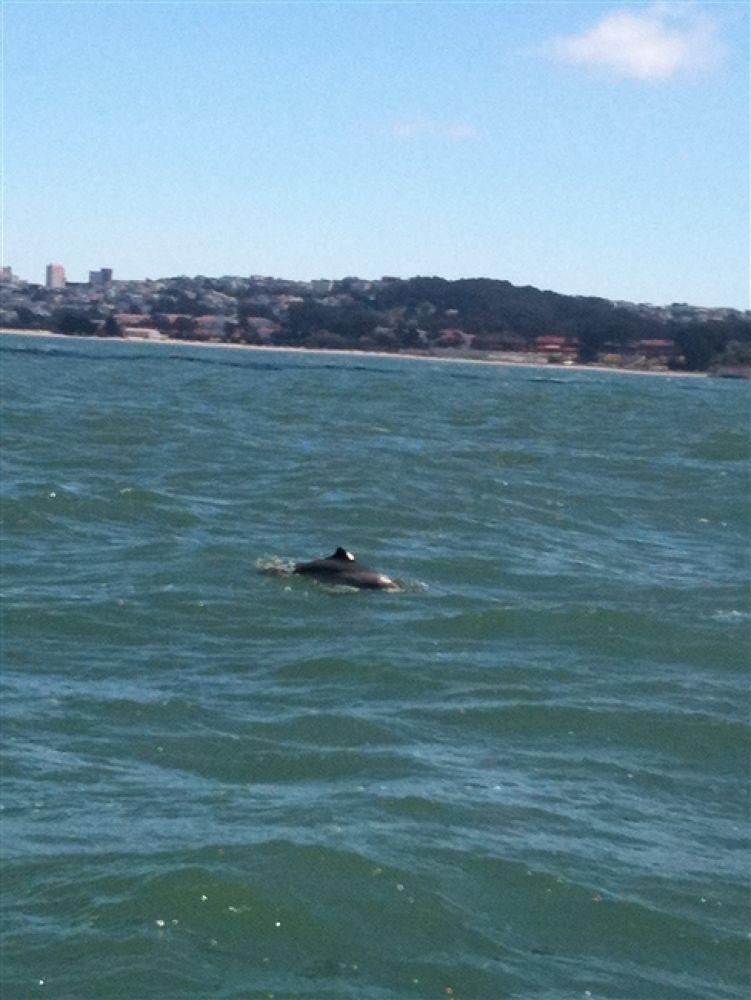 Photo in Random #delfin