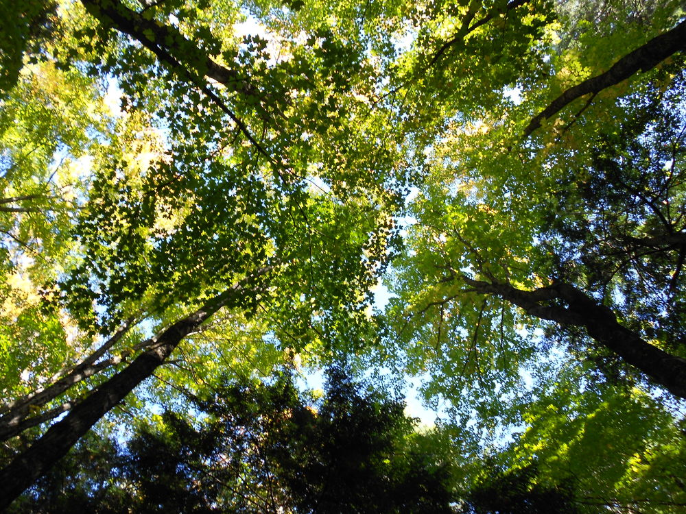Photo in Nature #trees #green #nature #outdoors #pretty