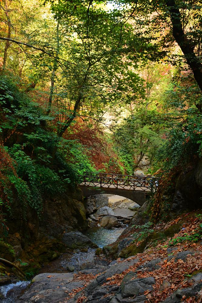 Photo in Nature #iran #golestan