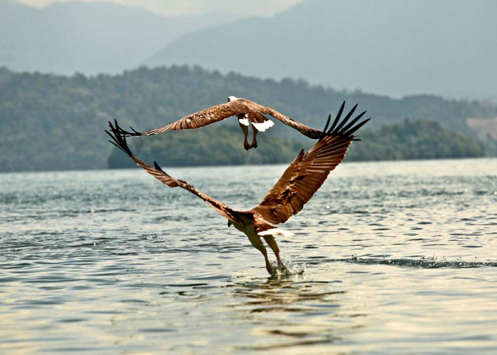 Photo in Animal #animals #flying #birds #malaysia