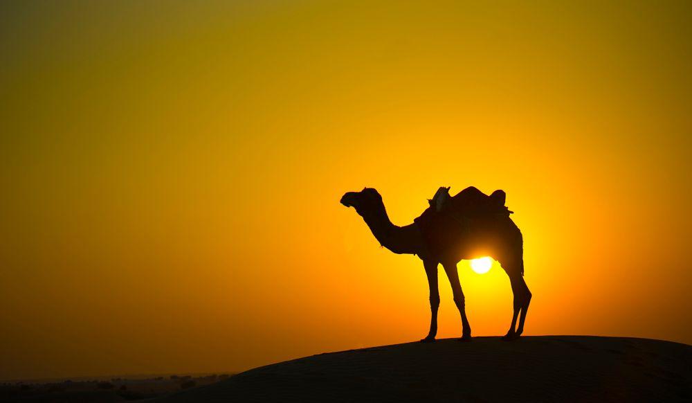 Photo in Landscape #camel #desert #rajasthan #sunset #landscape #india