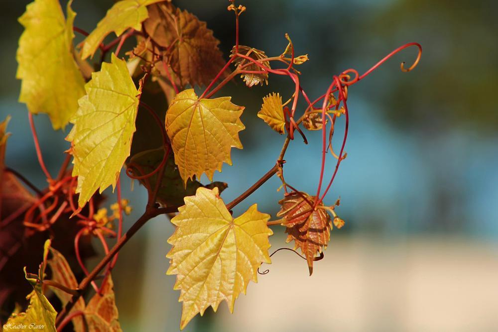 Photo in Random #nature #plant