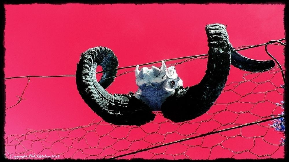 Photo in Still Life #rams #horn #fence #wire