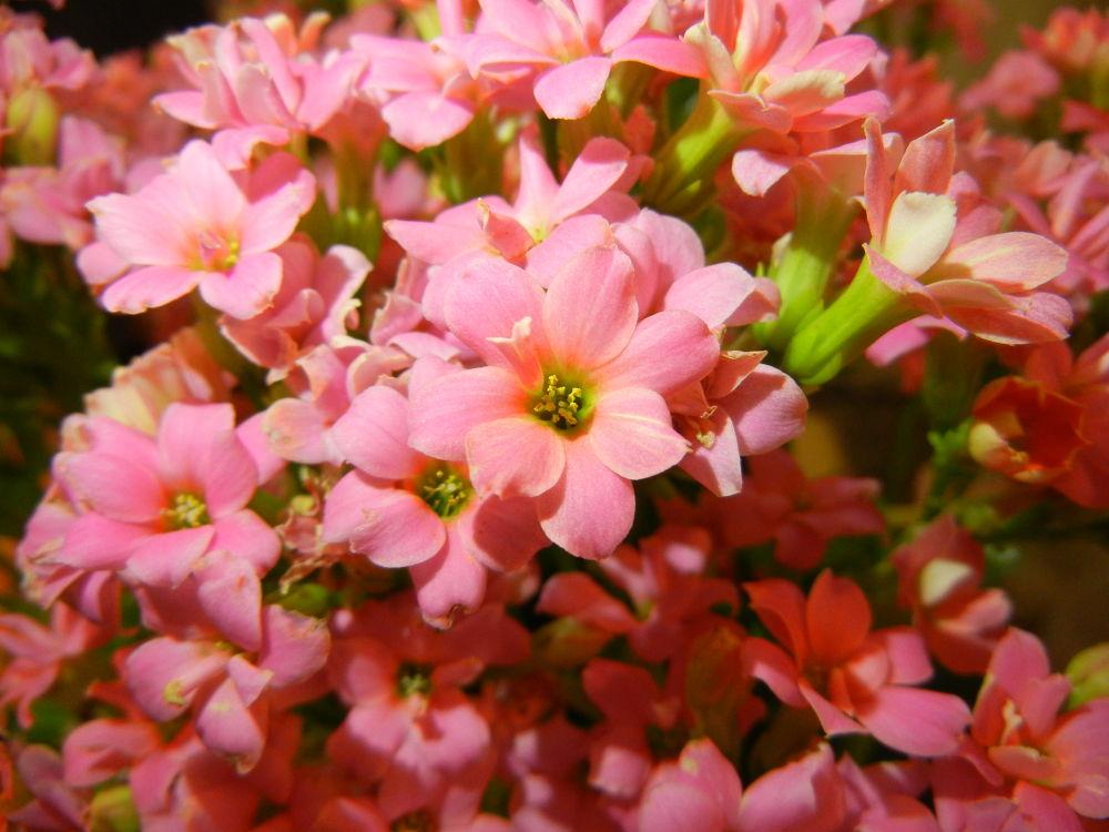 Photo in Nature #iran #tehran #flowers #flower #nature #iran nature #hd flower #hd image #hd photo #hd flowers #quality image #iran flowers #pink flowerss