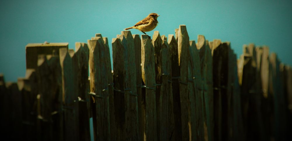 Photo in Nature #sparrow #fence #s #ky #centre