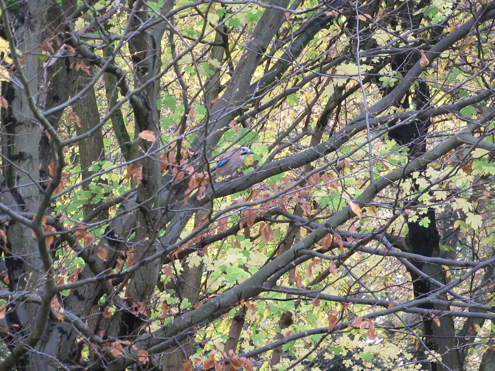 Photo in Nature #britzer garten