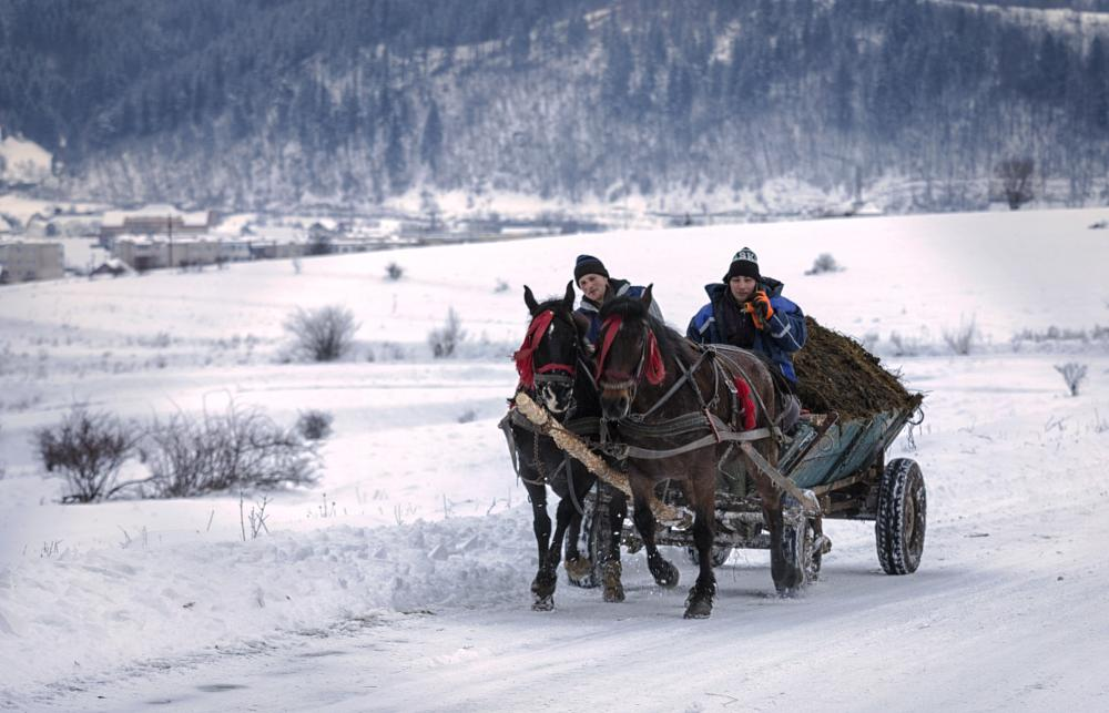 Photo in Rural #rural #cart #horses #winter #snow